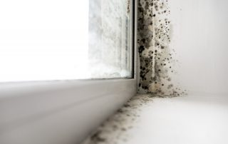 Reasons for Mold Growth Around Windows