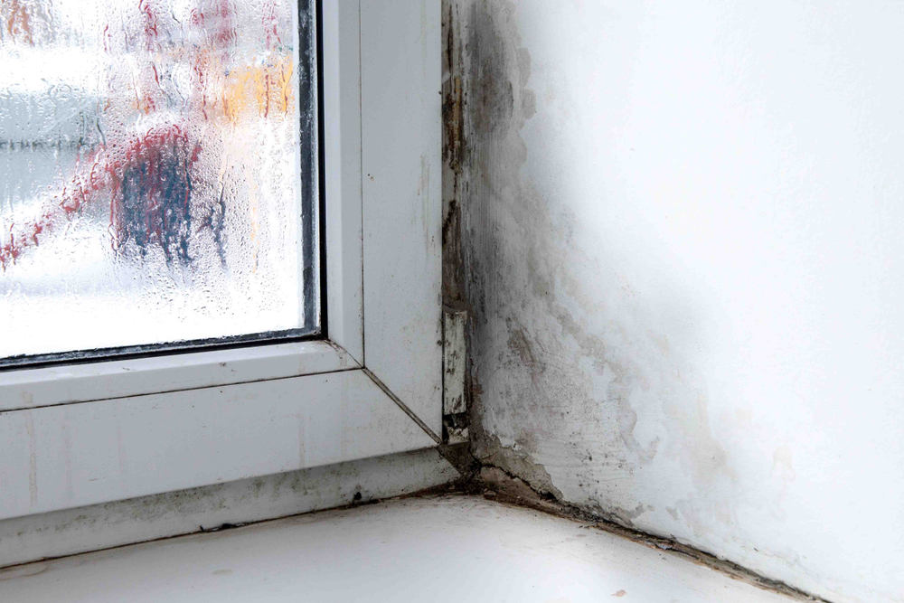 Windows with mold